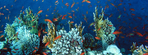 Diving in Red Sea Sites